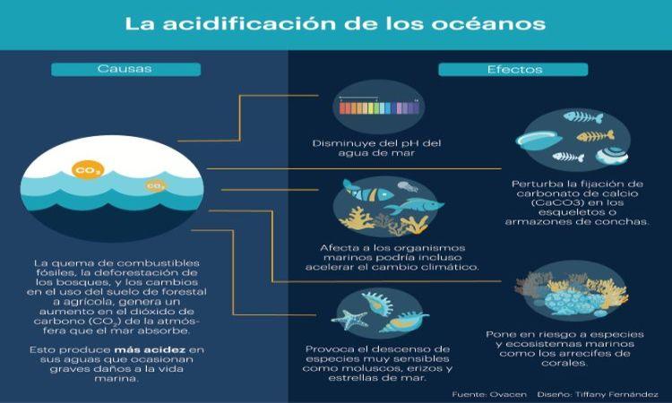 Red de investigadores se une contra la acidificación del mar Caribe.