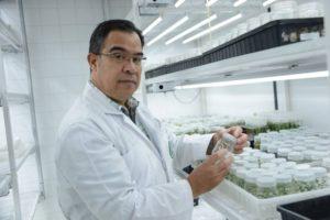 La nueva variedad fue desarrollada en el Laboratorio de Biotecnología de Plantas del Centro de Investigaciones Agronómicas de la UCR, bajo el liderazgo del Dr. Arturo Brenes Angulo