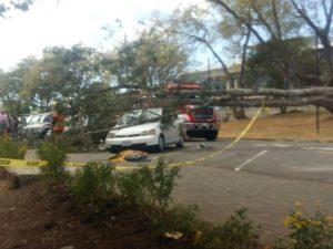 La UCR ya contactó a los propietarios de los vehículos que sufrieron daños para proceder a realizar las gestiones para el pago de los daños. (Foto: Karol Castro)